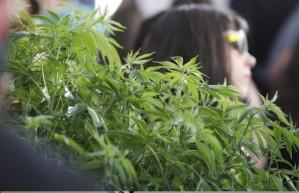 Education for Marijuana Business