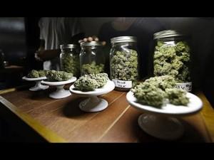 Marijuana Business Insurance