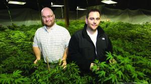 Marijuana law company1