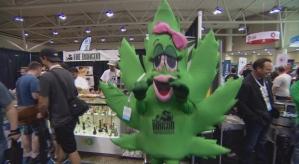 Cannabis expo1