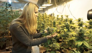cannabis-business-courses1