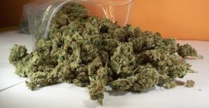 Medical weed seminars